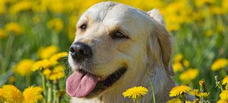 allergie-da animali casalingue
